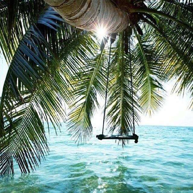 Palm tree swing over ocean