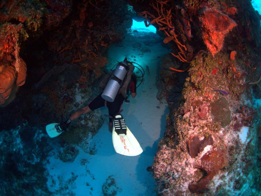 Cozumel Palancar Reef