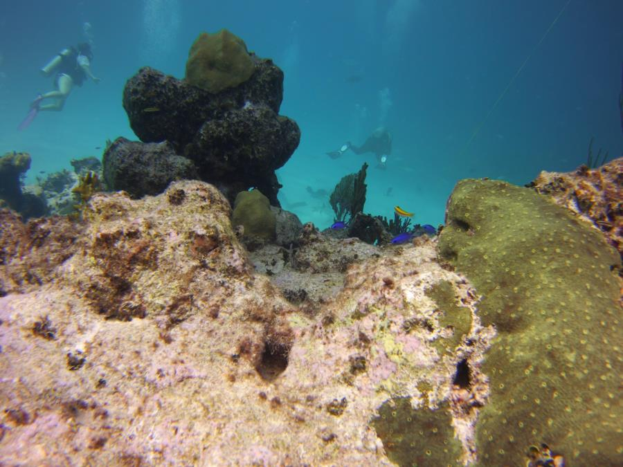 Nassau reef with divers