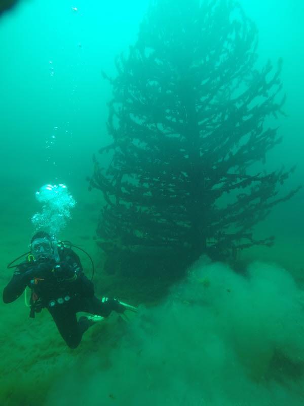 Gilboa Xmas Tree