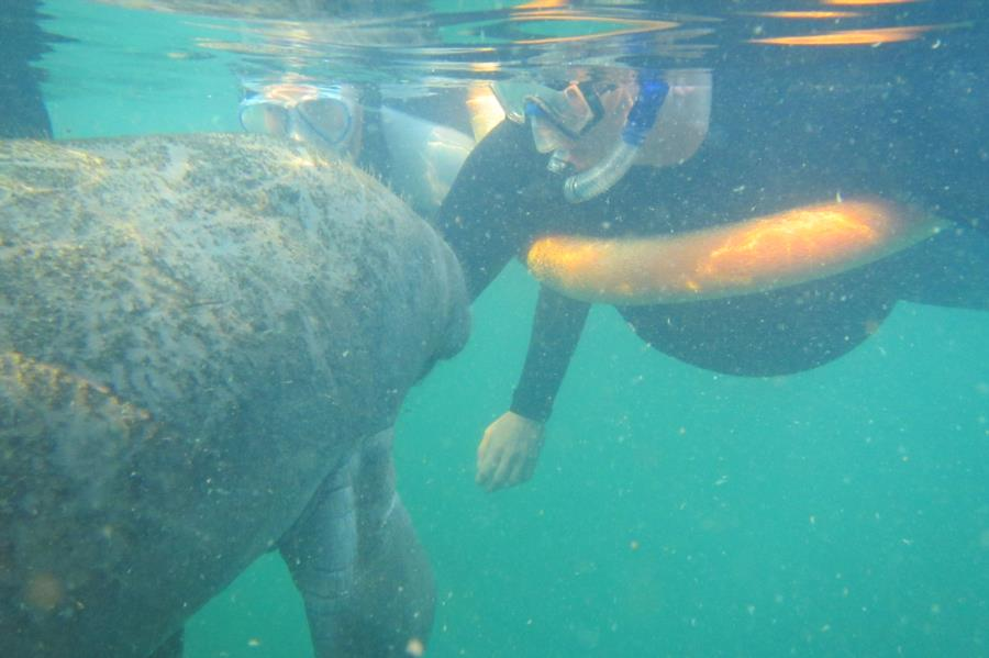 Kissed by manatee
