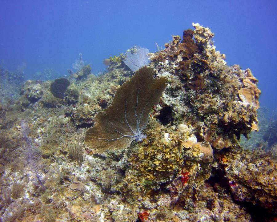 2017 Montego Bay, Jamaica