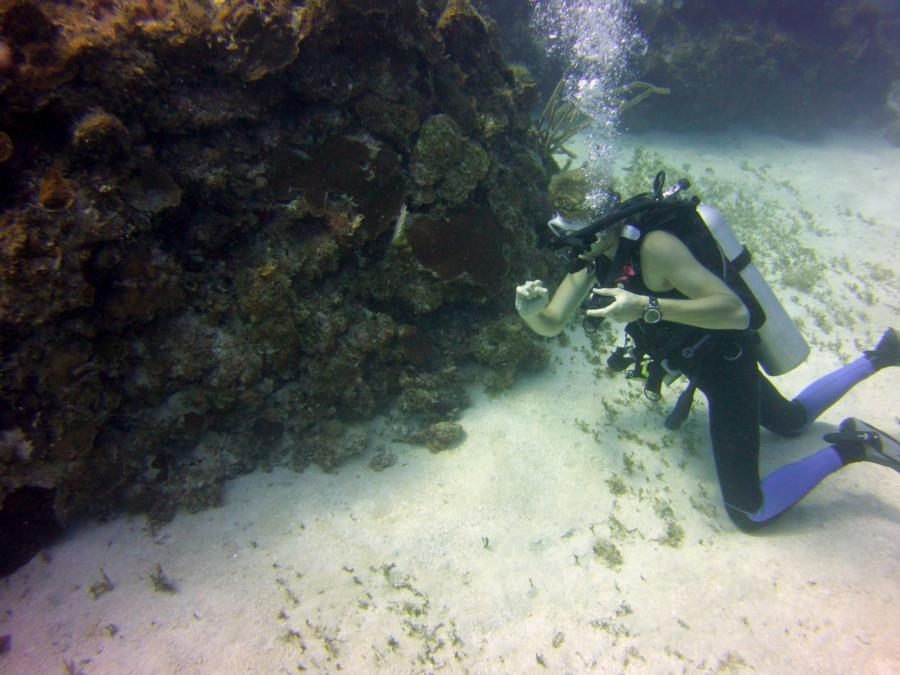 2017 Montego Bay, Jamaica- our dive guide signaling the presence of eels