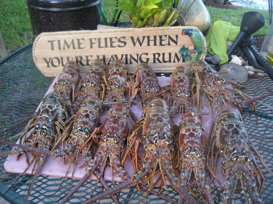 Lobsters 8.16.17