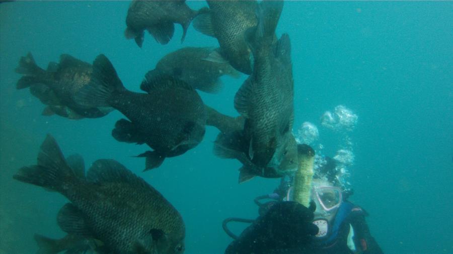 Fish Attack!