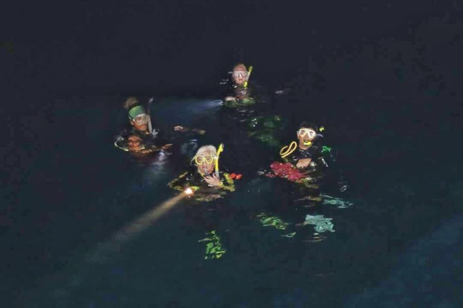 Cozumel Night Dive