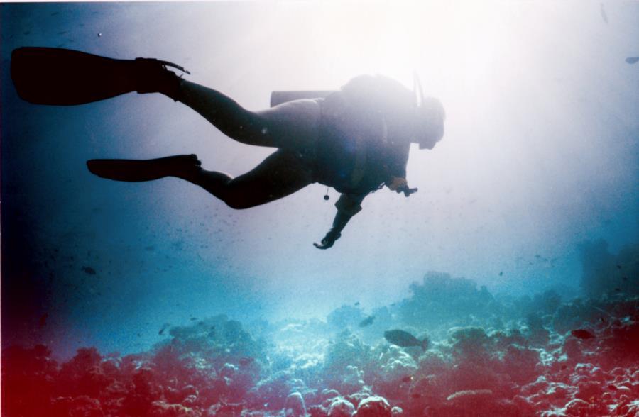 Diving Indian Ocean