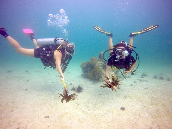 Hunting invasive lionfish with Arawak Divers