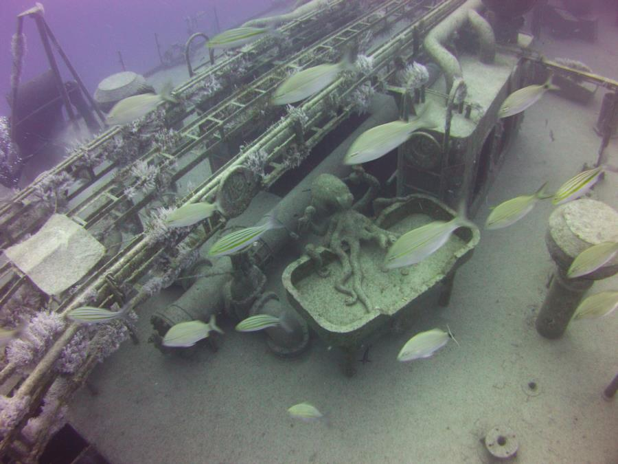 Diving on Lady Luck