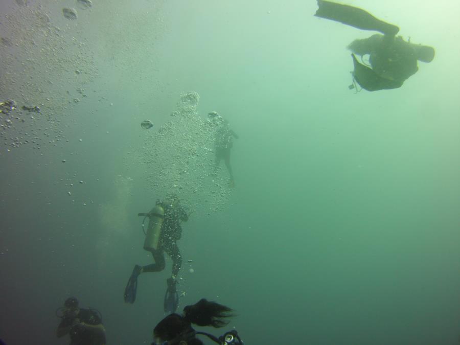 Dive buddys