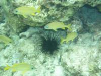 Coral Garden - Grand Turk