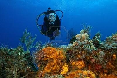Diving Doc: Preventing and Treating Coral Scrapes