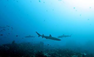 Shark Education in Komodo National Park