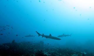Shark Education in Komodo National Park