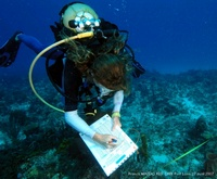 Reef Check EcoAction Course