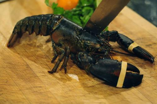 How to Humanely Kill and Boil a Lobster