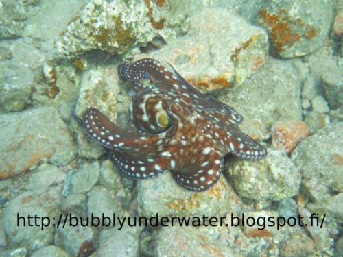 Beginner's Guide to Diving, part 3: Dealing With Problems Underwater