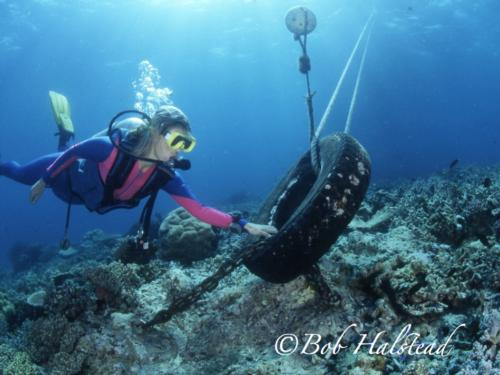 Ethical Diving