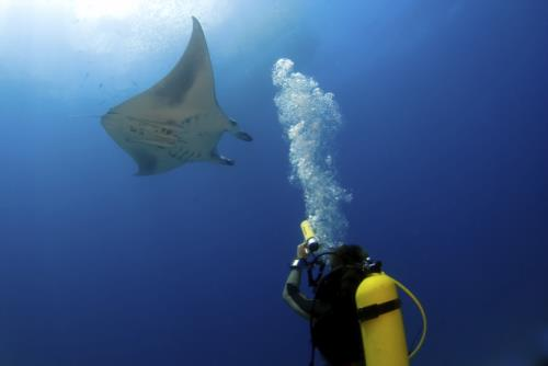Best Locations to Scuba Dive with Manta Rays