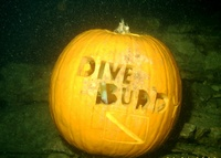Pumkin Carving Dive