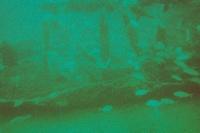 Carolina Beach diving