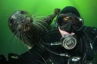 Missing SF Diver