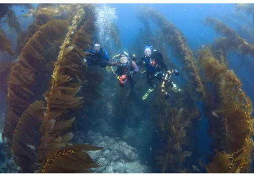 Help The Kelp