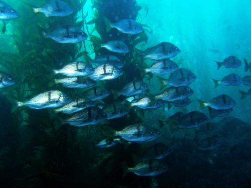 Laguna Beach KelpFest