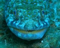 Roatan Dive Trip
