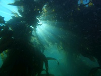Channel Islands Dive Trip Report