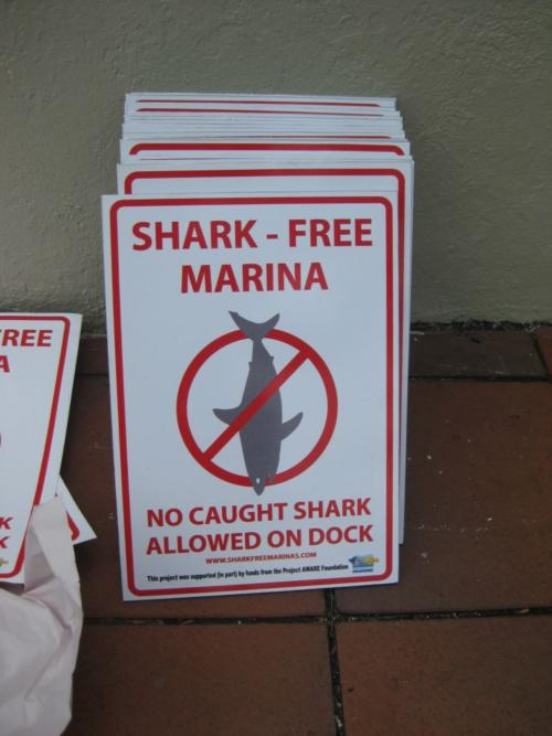 """No Caught Shark Allowed"": Matava leading the Shark Free Marina Initiative in Fiji"
