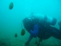 Another Shaws cove dive