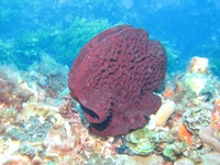 Rottnest Island Dive