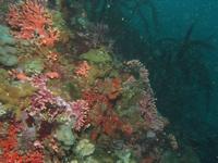 Dive Log November 10th