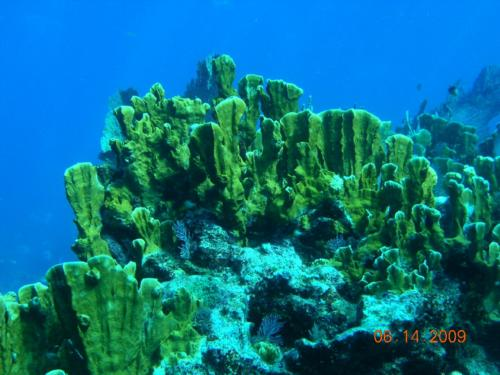 Key Largo Dives