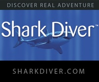 Underwater Thrills: Swimming With Sharks