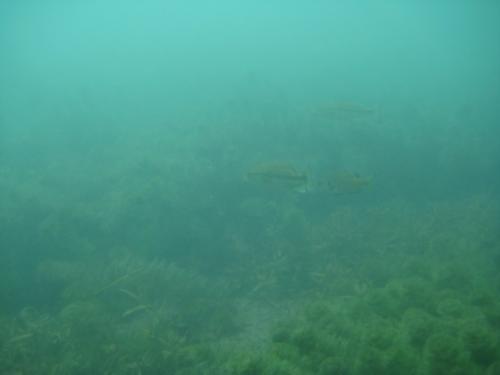 Comal River 3-16-09