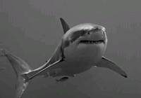 Great White - 01