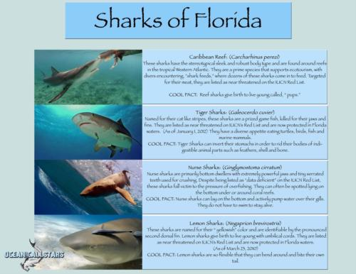 Yes, You Can Help Sharks!