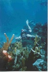 Christopher from Scottsdale AZ | Scuba Diver