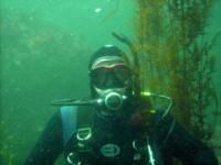 Diving Monterey