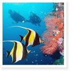Private Advanced Scuba Class - San Diego - $850