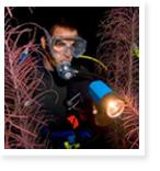 La Jolla Scuba Dive Tour – Night - $85