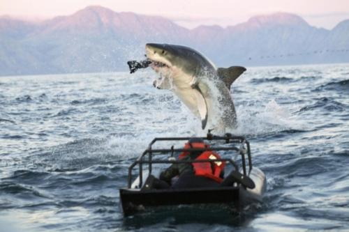 Air Jaws Apocalypse - Shark Week 2012