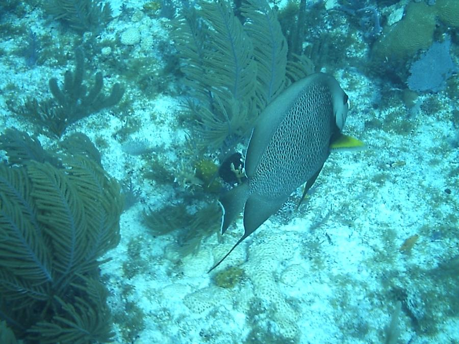 John Pennekamp Coral Reef State Park - John Pennekamp State Park