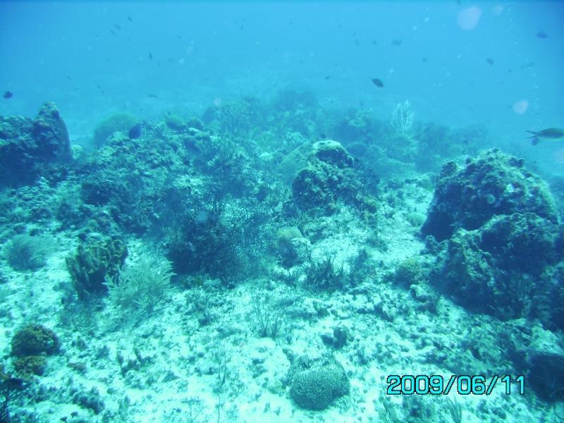 Palancar Reef - Palancar Reef, drift dive in Cozumel, Mexico - June 2009