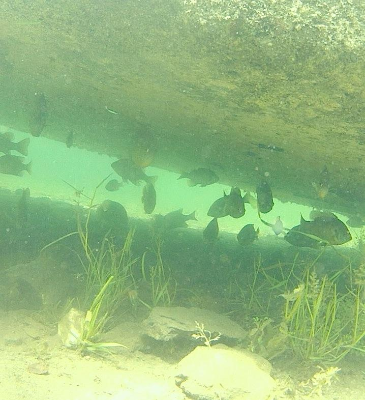 Tulloch lake south shore the fish in class for Lake tulloch fishing