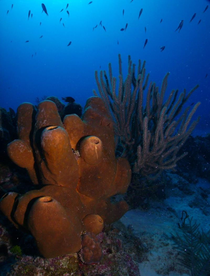 Reef Scene, Grand Cayman