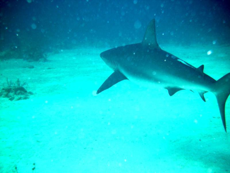 Bahamas......nice dive