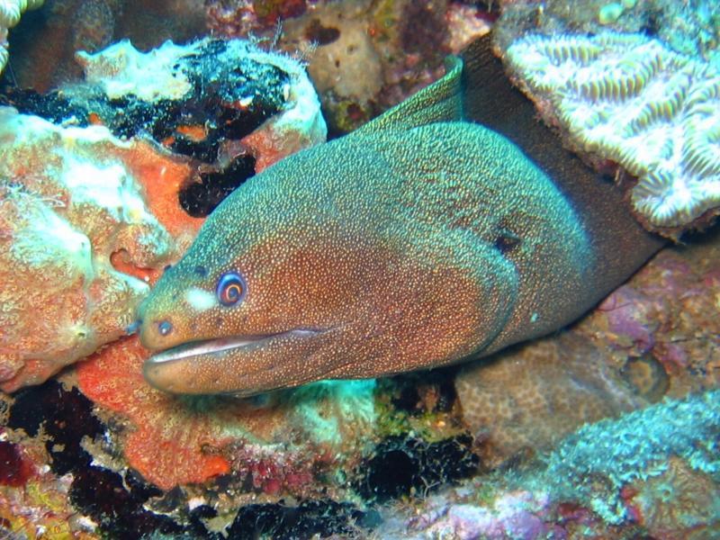 feel the eel